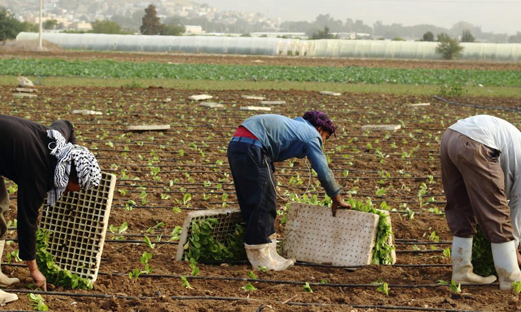 إعفاء مزارعين راغبين بقروض من تقديم دراسات جدوى من مكاتب متخصصة واعتماد دراسات